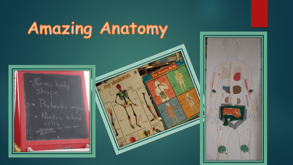 Amazing Anatomy